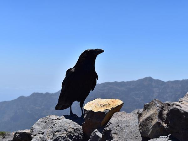 Flora und Fauna auf La Palma
